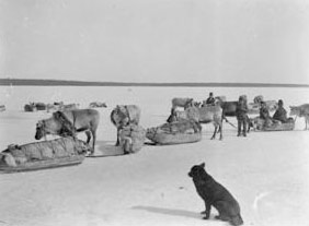 Reindeer raid on Lake Malgomaj, Photo: J P Dahlberg, Skansholm